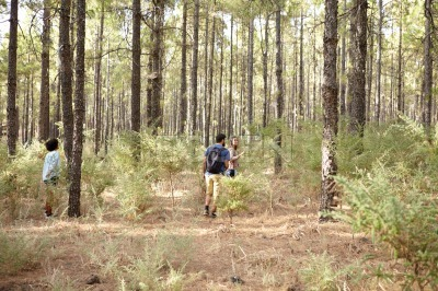 Friends exploring the pine tree plantation