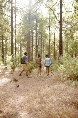 Friends hiking on a trail of pines