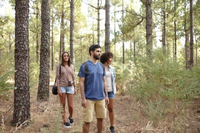 Friends strolling through a pine plantation
