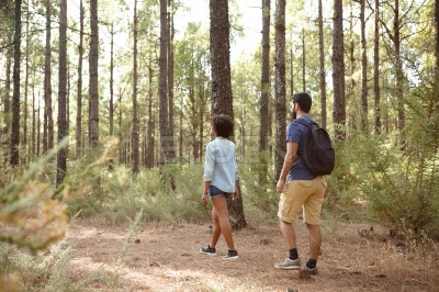 Friends walking in a pine forest
