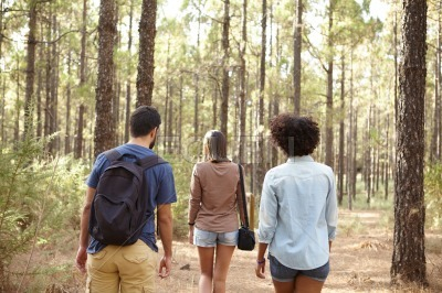 Friends walking in a pine plantation
