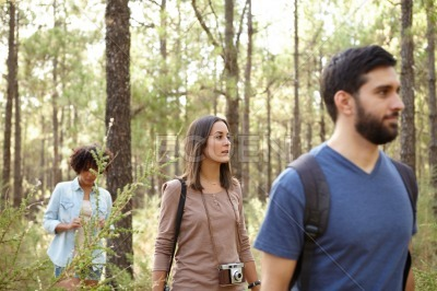 Three friends in a pine forest
