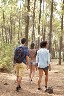 Three friends walking in the forest