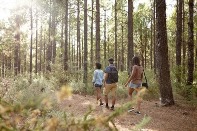 Three strolling friends in a pine forest
