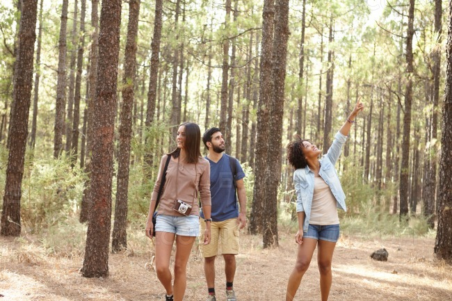 Friends exploring a pine tree forest stock photo