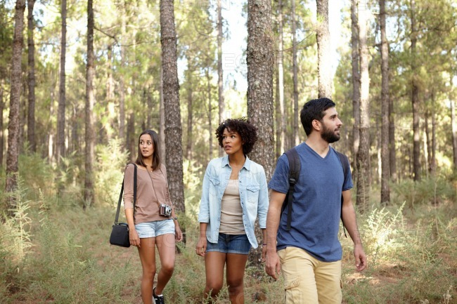 Friends visiting the pine tree forest stock photo