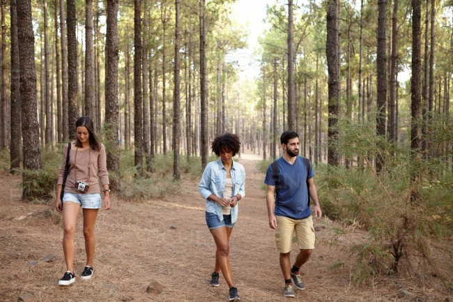 Friends walking on a path in the woods stock photo