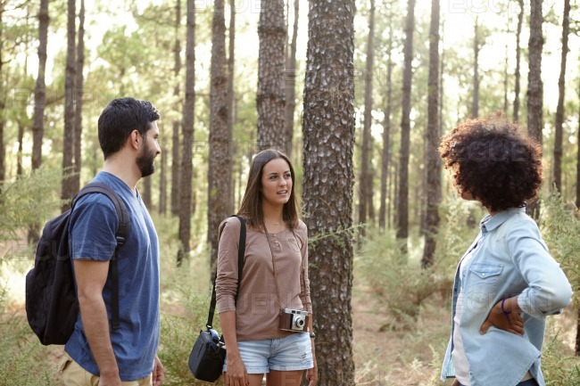 Group discussion in the pine forest stock photo