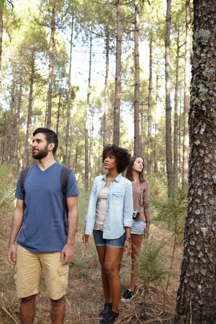 Three friends walking through a forest stock photo