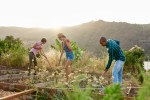 Young farmers preparing a vegetable patch