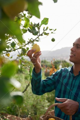 Farmer looking happily at his lemons
