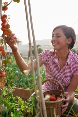Female farmer with basket of tomatoes