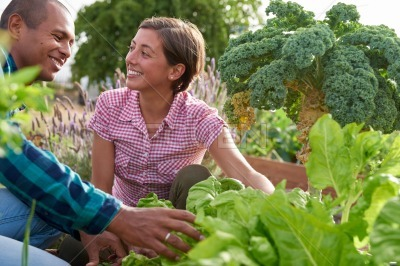 Happy vegetable farmers tilling the patch