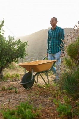 Happy young farmer pushing a wheelbarrow