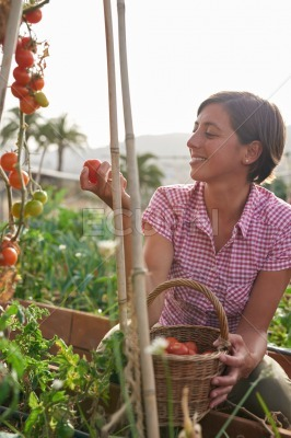 Pretty farming girl with fresh tomatoes
