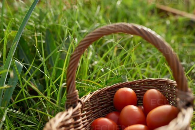 Basket of healthy fresh plump tomatoes stock photo