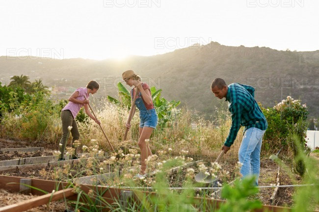 Young farmers preparing a vegetable patch stock photo