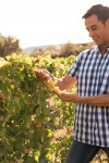 A man in a checkered shirt in the vineyards