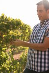 A young attractive man in the vineyards