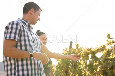 A couple out on a sunny day in the vineyards