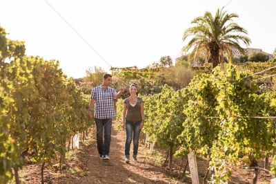 A couple walking through the vineyards