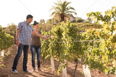 A young man and woman inspecting the vineyards