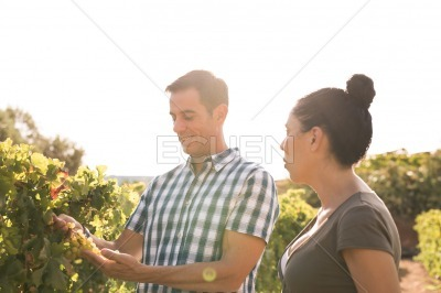 A young man and woman looking at vines