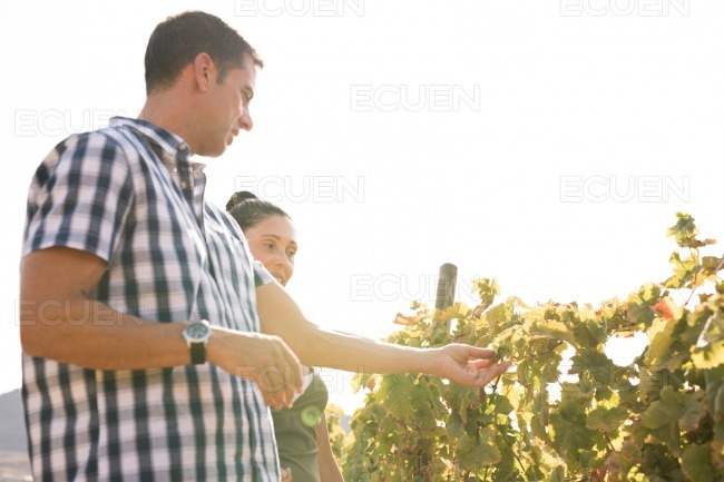 A couple out on a sunny day in the vineyards stock photo