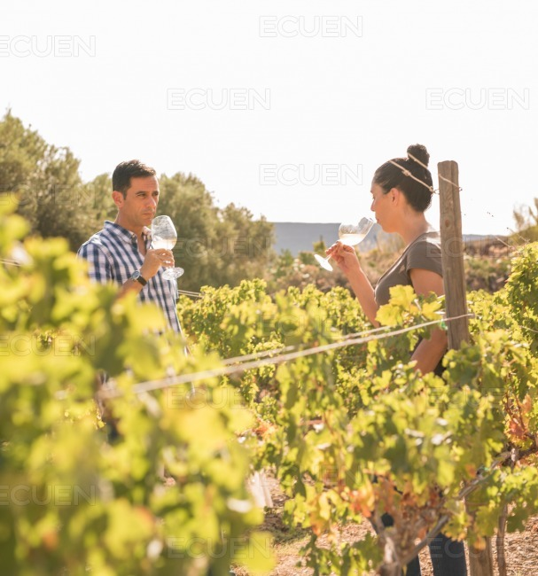 A young man and woman in a vineyard