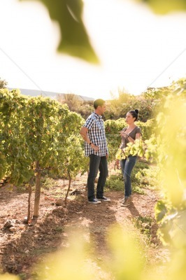 Two people talking in the vineyards