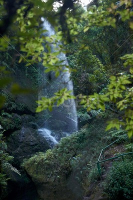 Waterfall peaking through the green leafy trees