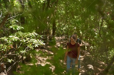 Young, attractive lady walks among trees
