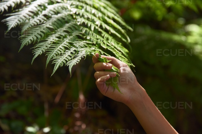Hand holding a fern leaf frond stock photo