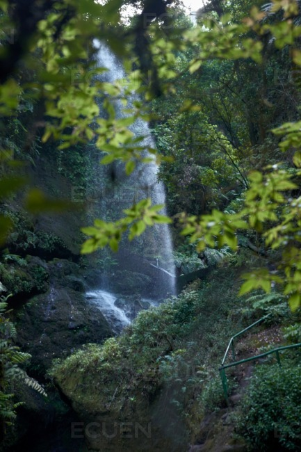 Waterfall peaking through the green leafy trees stock photo