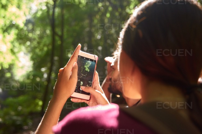 Woman taking a picture of trees stock photo